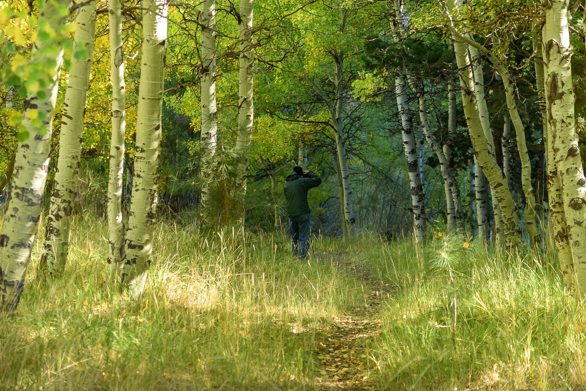 rush_creek_fred_morning_trees.jpg
