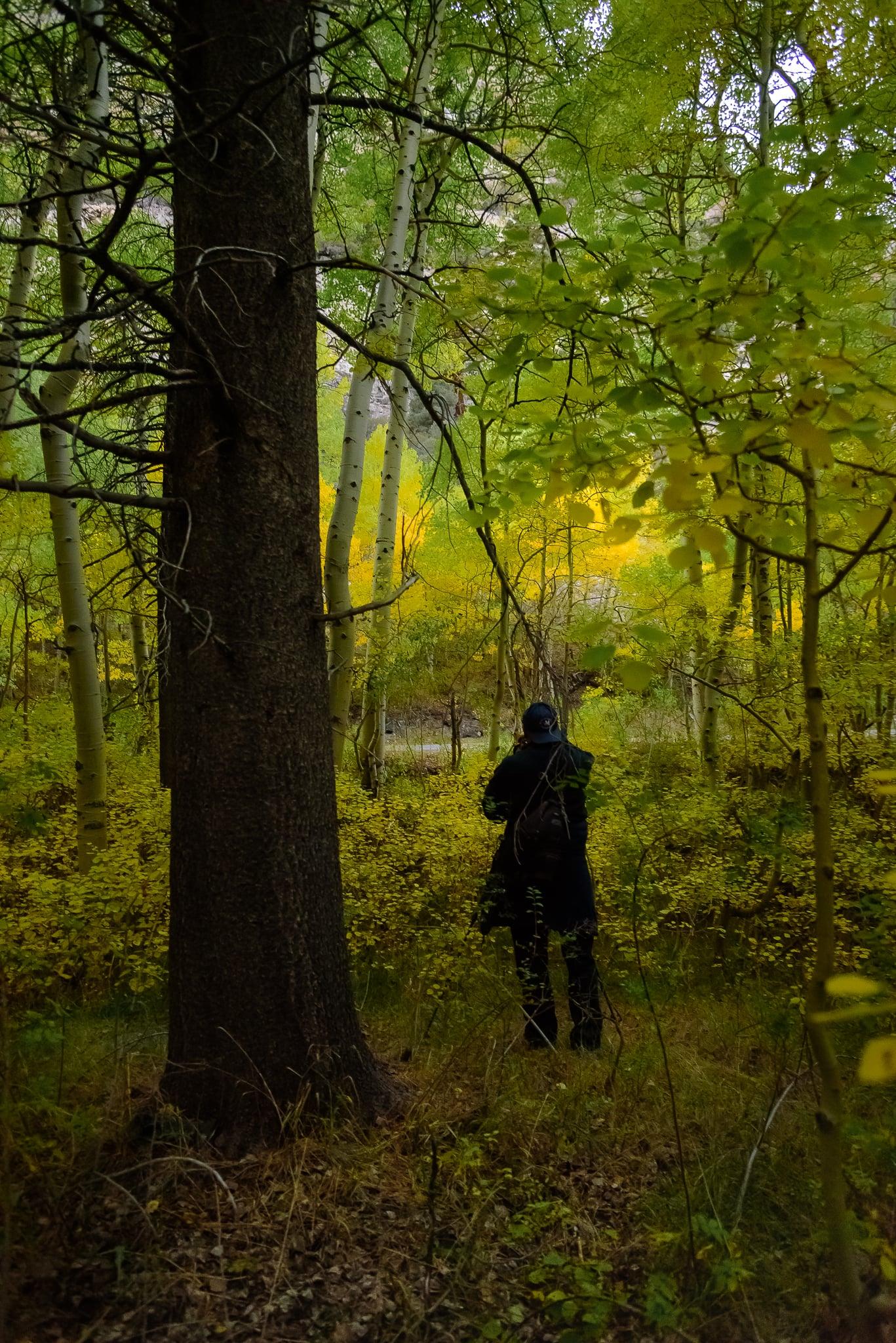 Hunting for aspen groves.