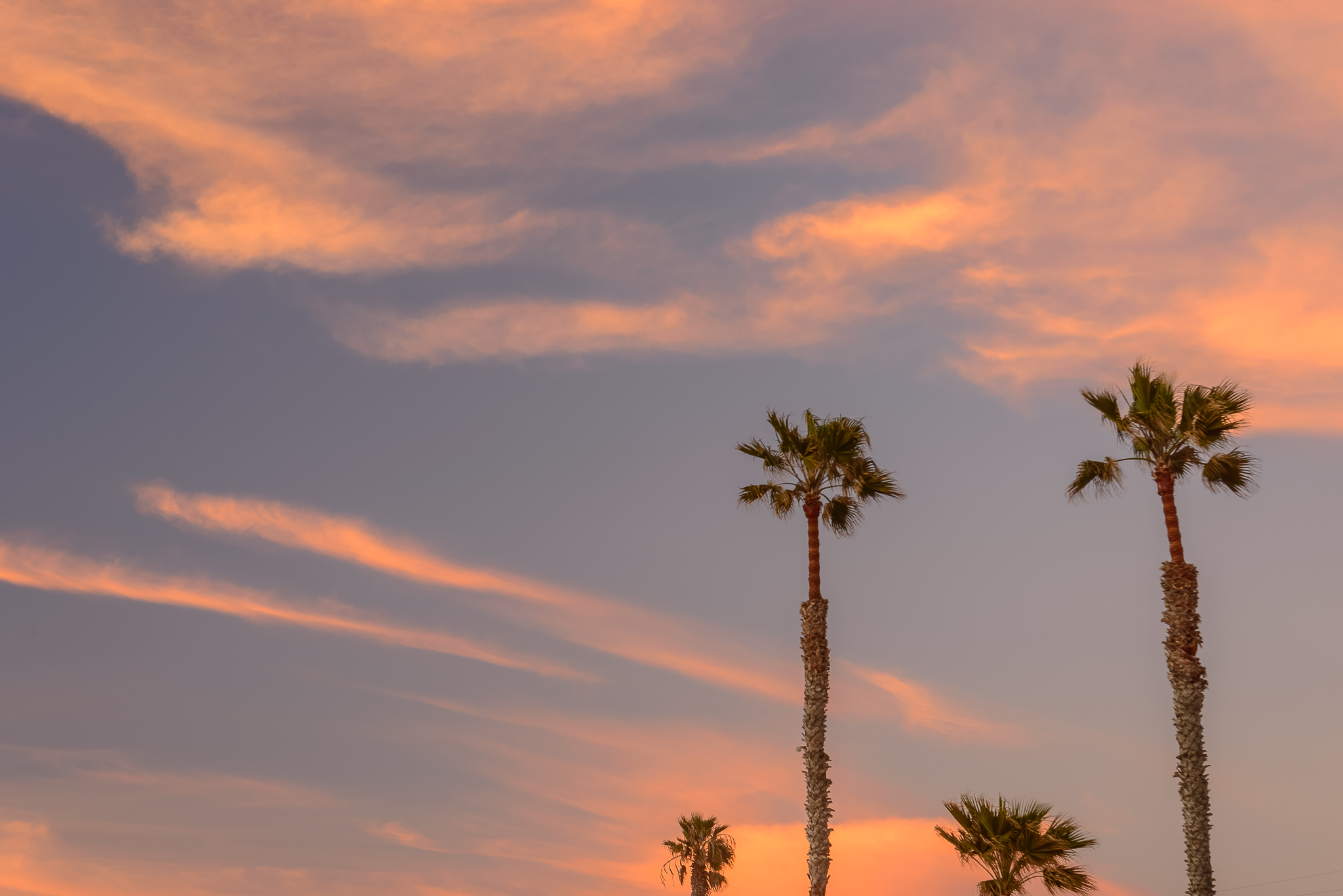 Do the dance of the palms. San Diego, CA
