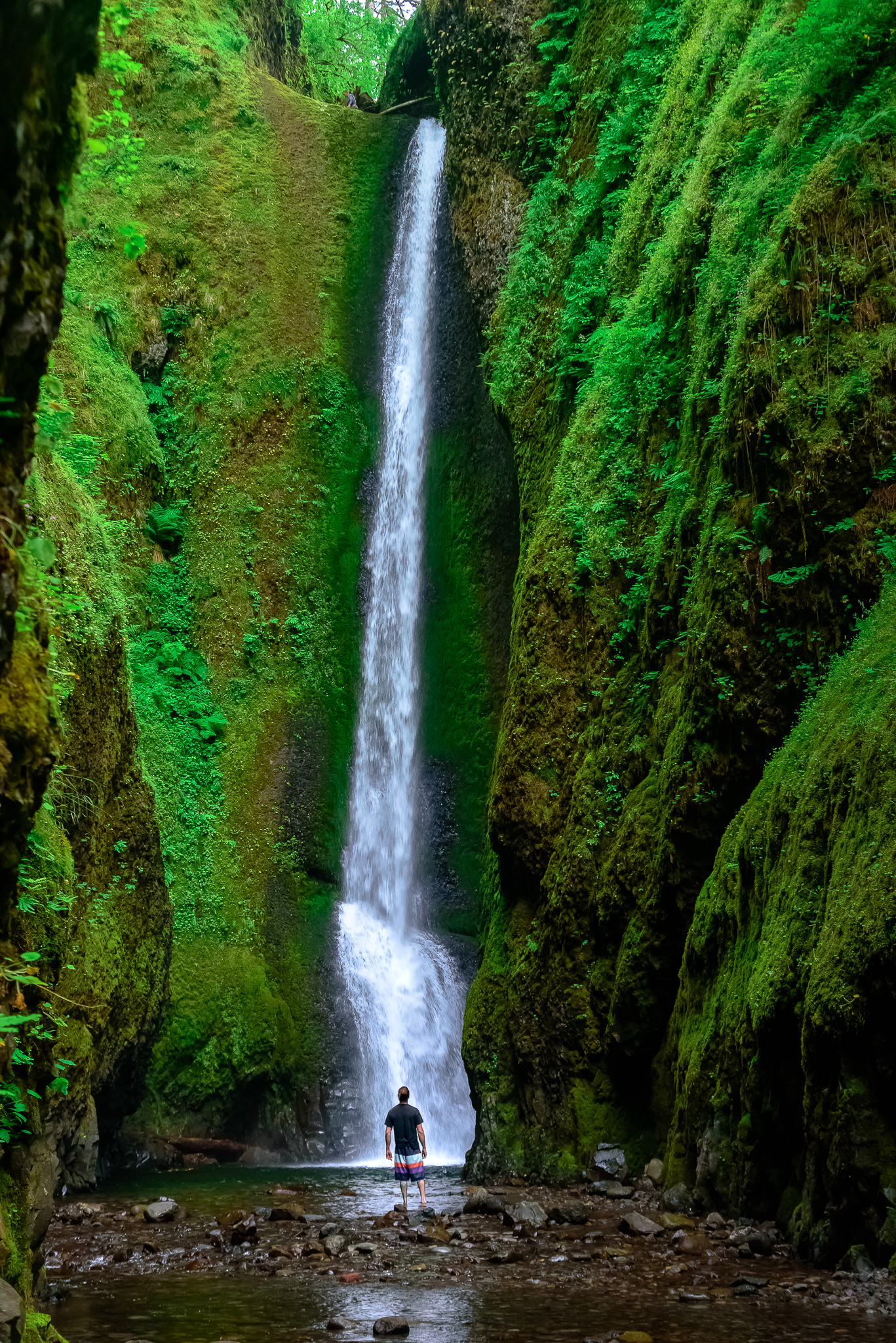 Oneonta Falls. Columbia River Gorge, OR.