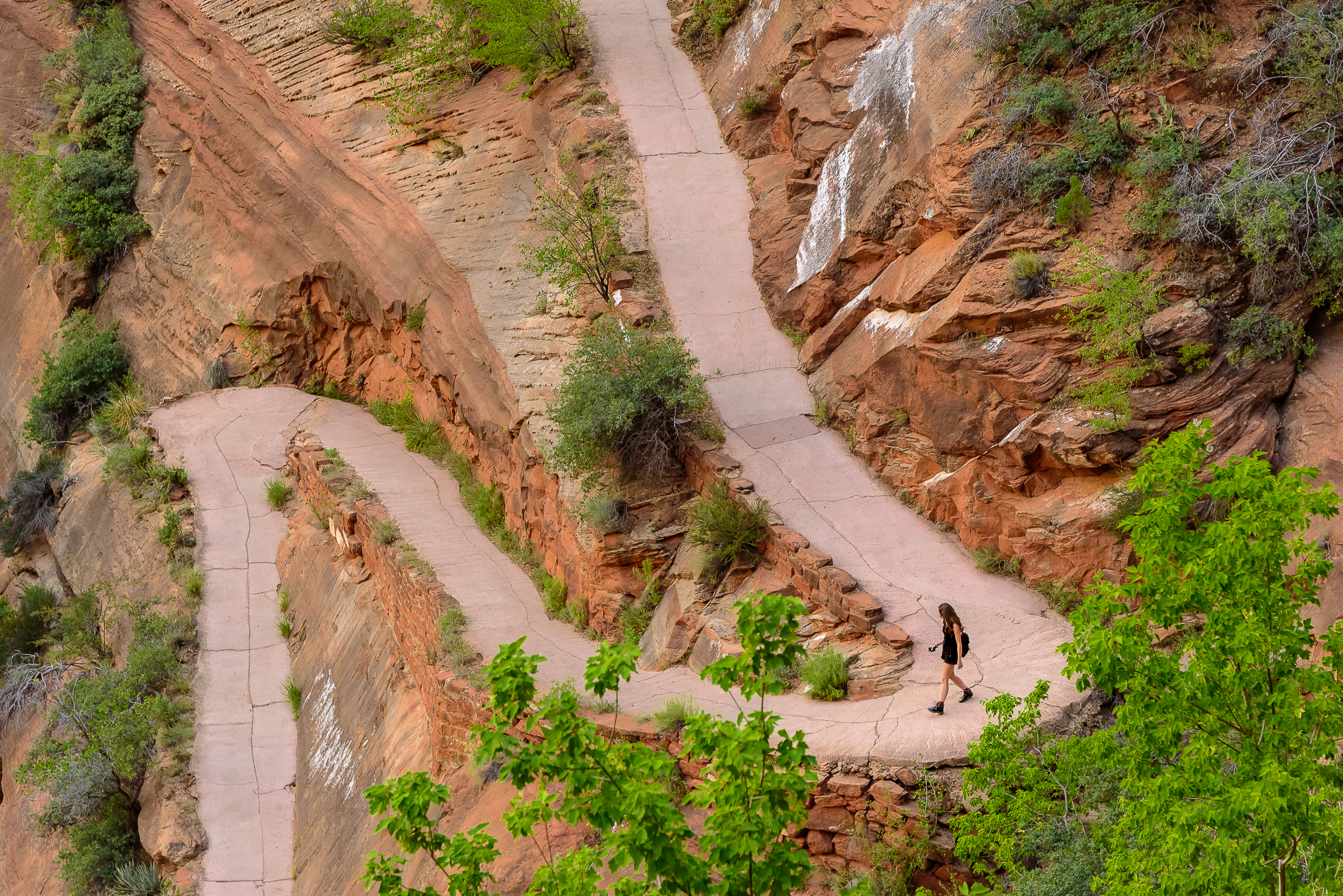 The path of Angels, but yet far from their Landing. Zion National Park, UT.