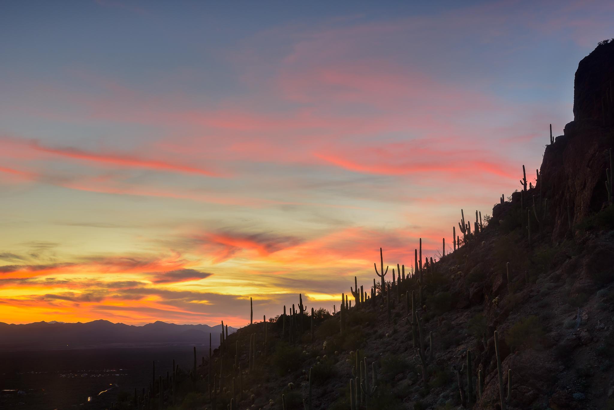 Tucson Mountain Park, AZ.