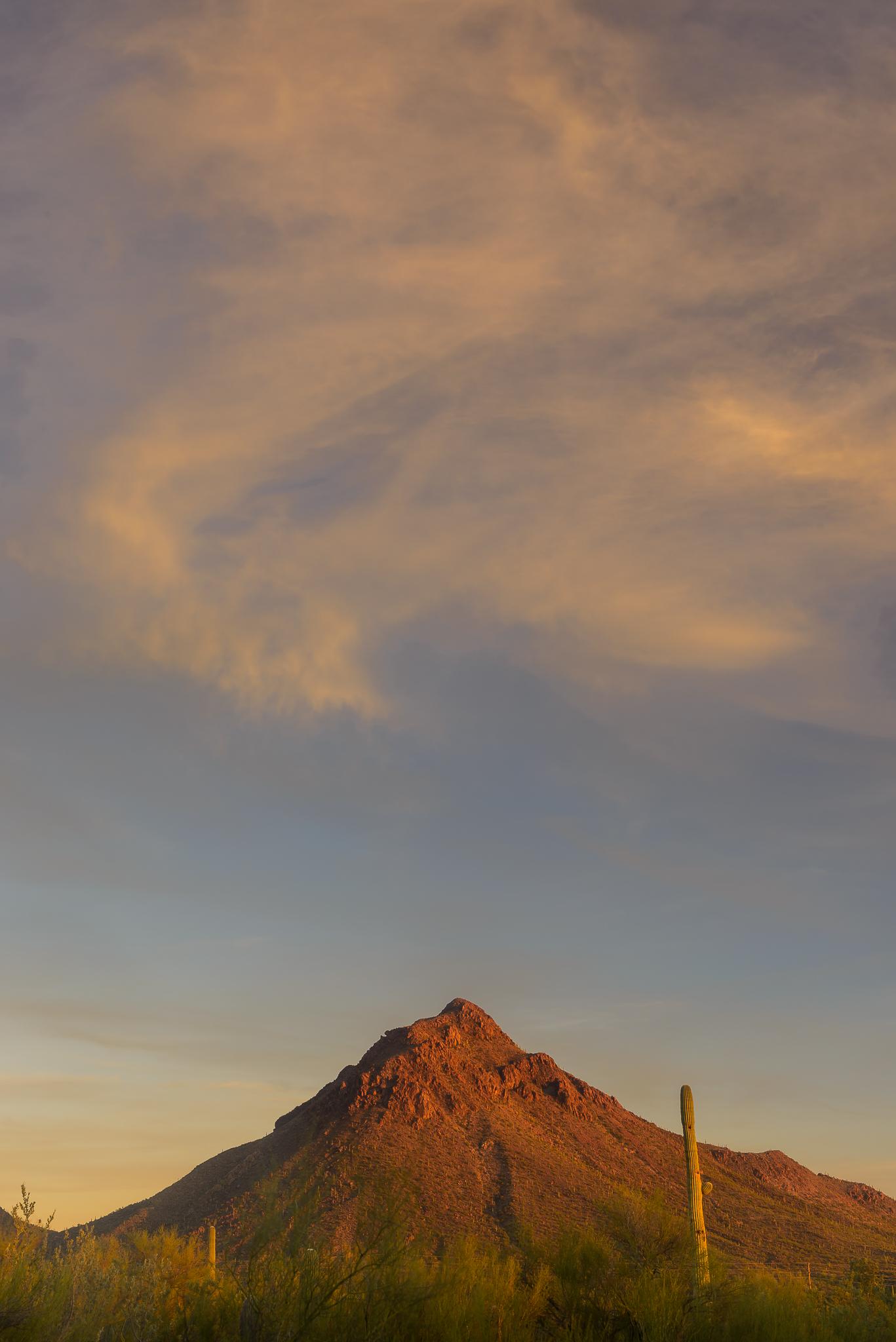 Witching hour. Saguaro National Park, AZ.