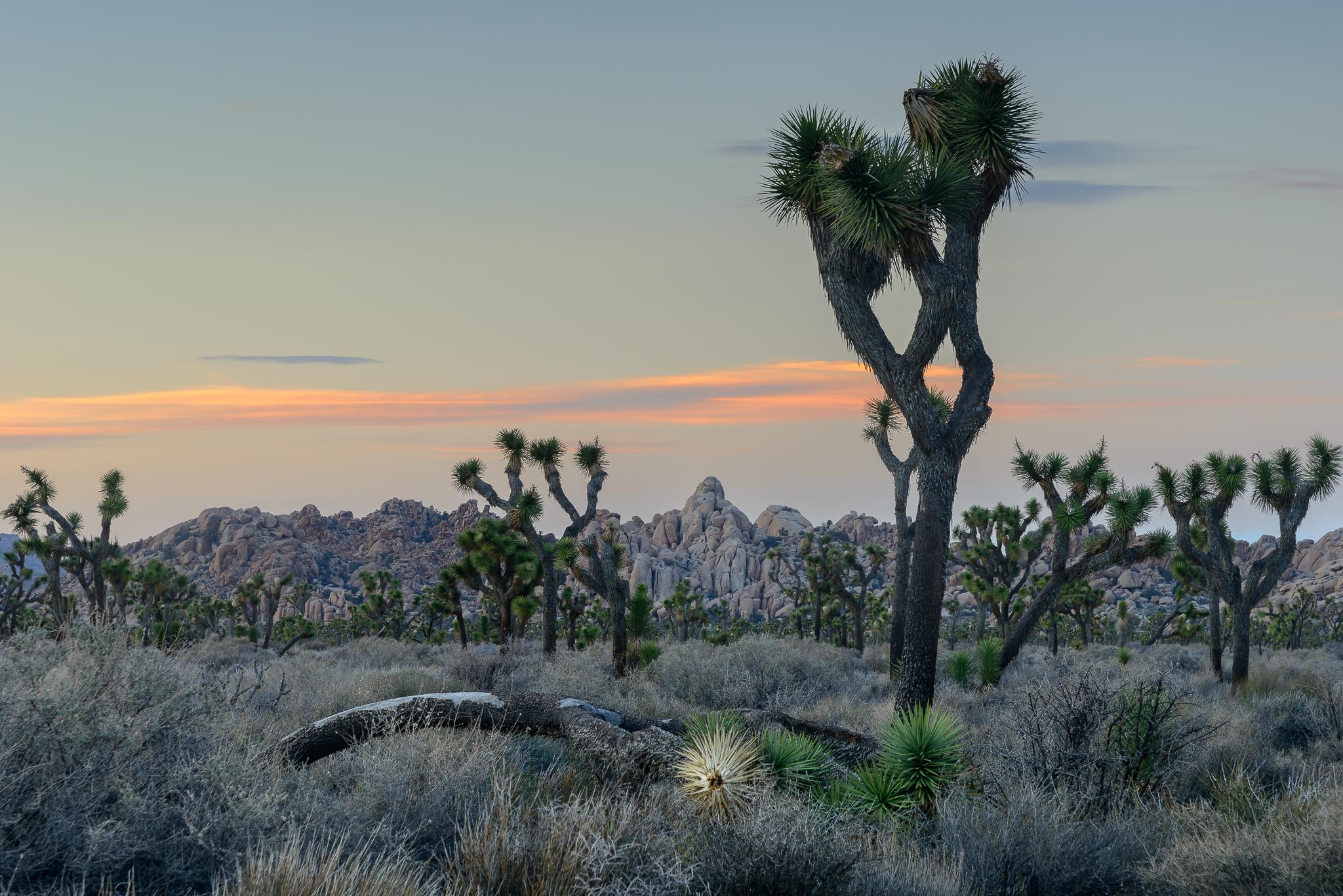Joshua Tree National Park, CA.