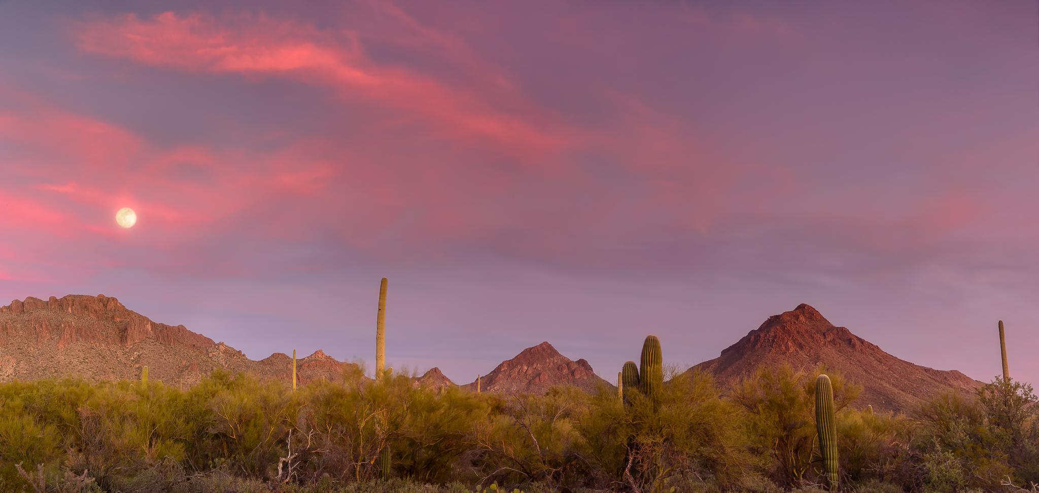 Surprise moonrise cameo. Tucson Mountain Park, AZ.