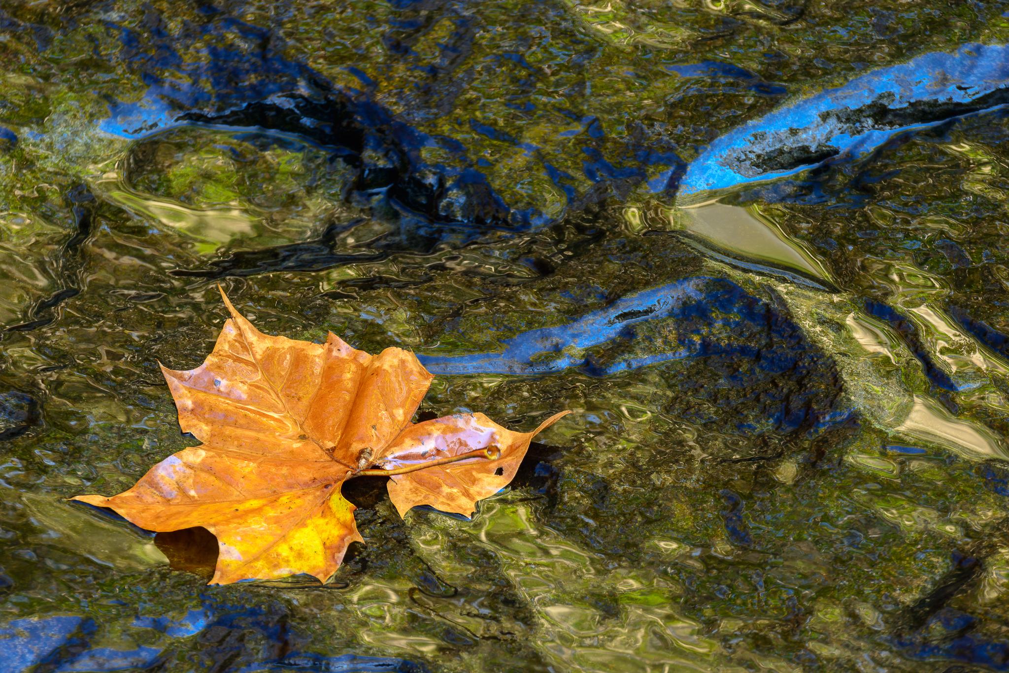 Liquid, laid out. Ohiopyle State Park, PA.
