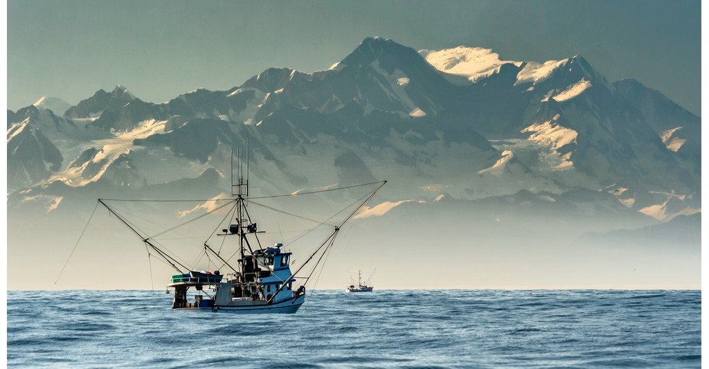 Hot Cod görs av Alaska Pollock som fiskas i de kalla vattnen söder om Alaska. Fisken är frilevande och belastar inte miljön på samma sätt som odlad fisk och är heller inte behandlad med antibiotika. För att inte förstöra fiskens habitat använder man sig av flyt-trål som aldrig kommer i kontakt med havsbotten.  Fisket är noga reglerat av amerikanska myndigheter, vilket säkerställer att endast livskraftiga bestånd beskattas. Det rör sig om 100% hållbar fisk, certifierad enligt MSC (Marine Stewardship Council) och RFM (Responsible Fisheries Management).  Alaska Pollock är rik på Omega 3 som är livsnödvändigt och minskar risken för hjärt- och kärlsjukdomar. För att bevara fräschheten och kvalitén, filear och fryser man fisken till havs inom sex timmar från fångst.