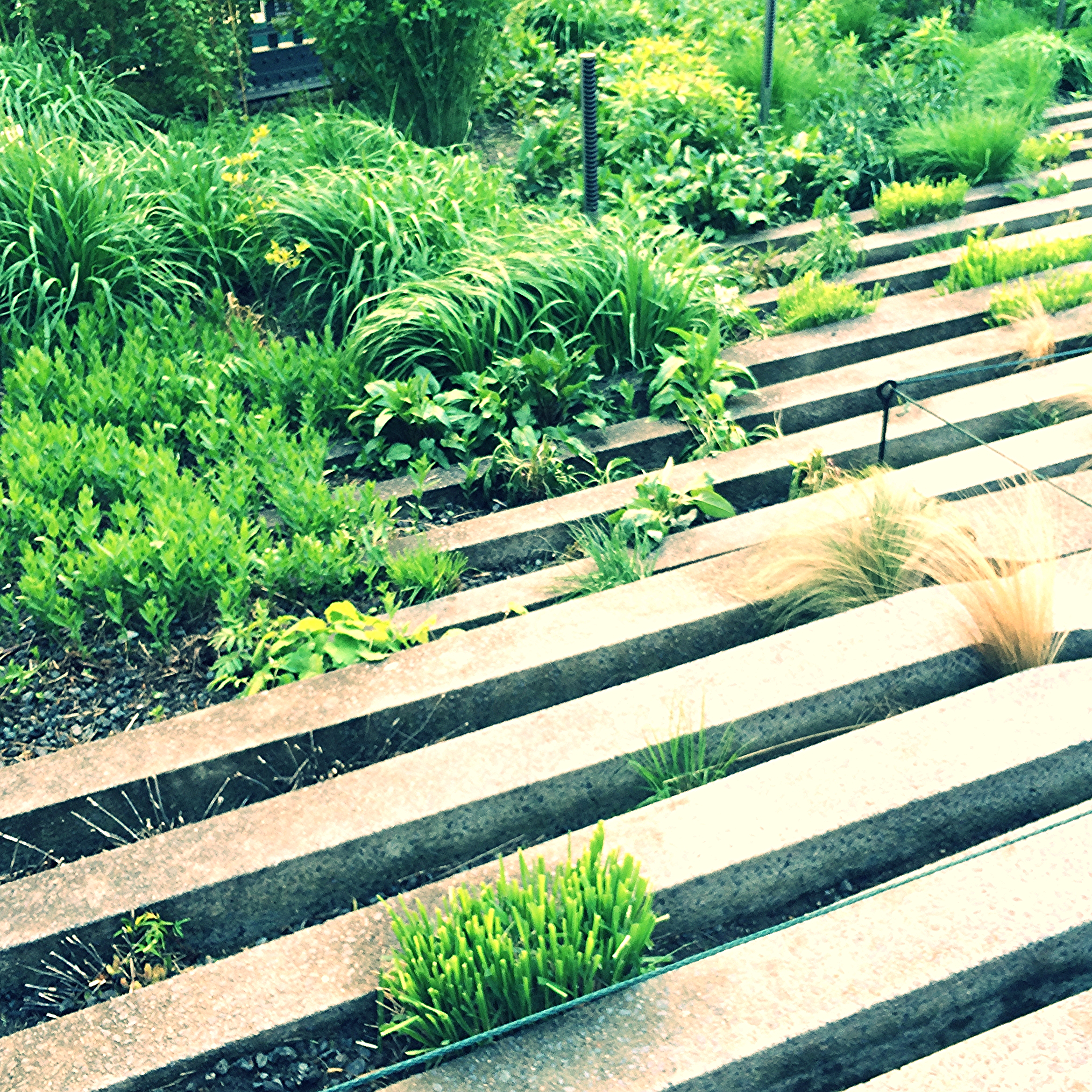 an interesting mix of concrete lines intermixed with softer planting
