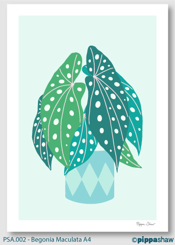 Pippa-Shaw---Begonia-Maculata-A4.jpg