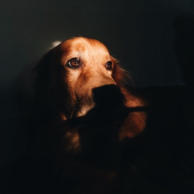 brown eyed good boy