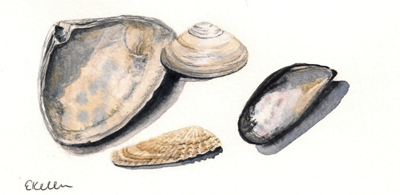Shells painted while on the beach....