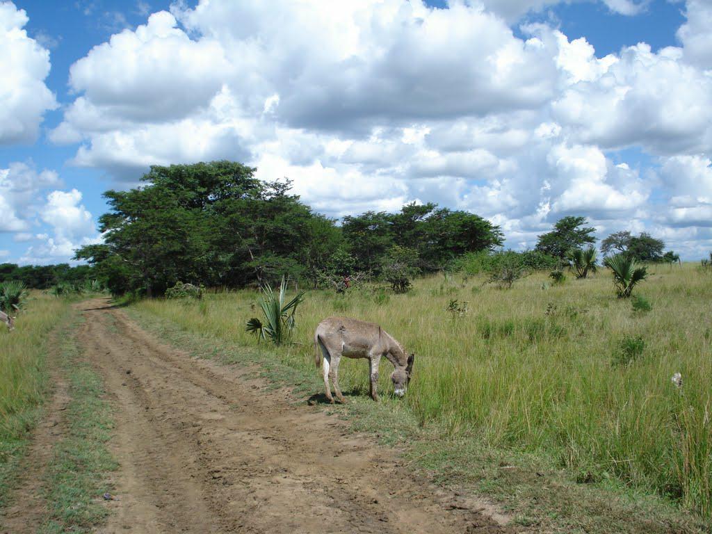 Near Chikupi