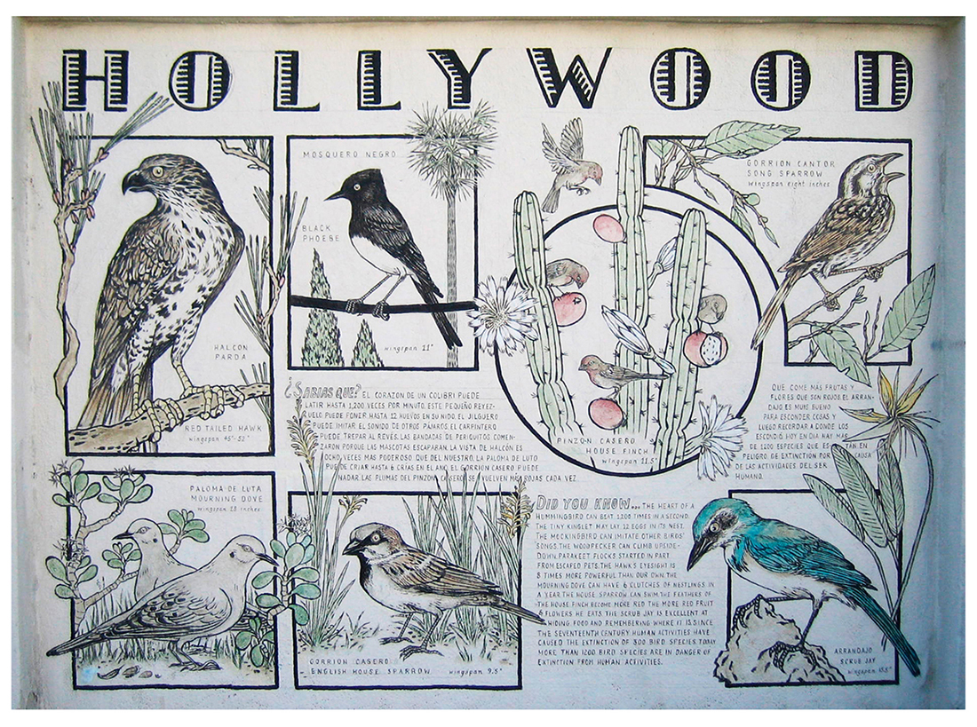 BIRDS OF HOLLYWOOD, detail, side II; exterior mural, acrylic on wall, 13' x 11'. Fountain Ave in Hollywood, now destroyed