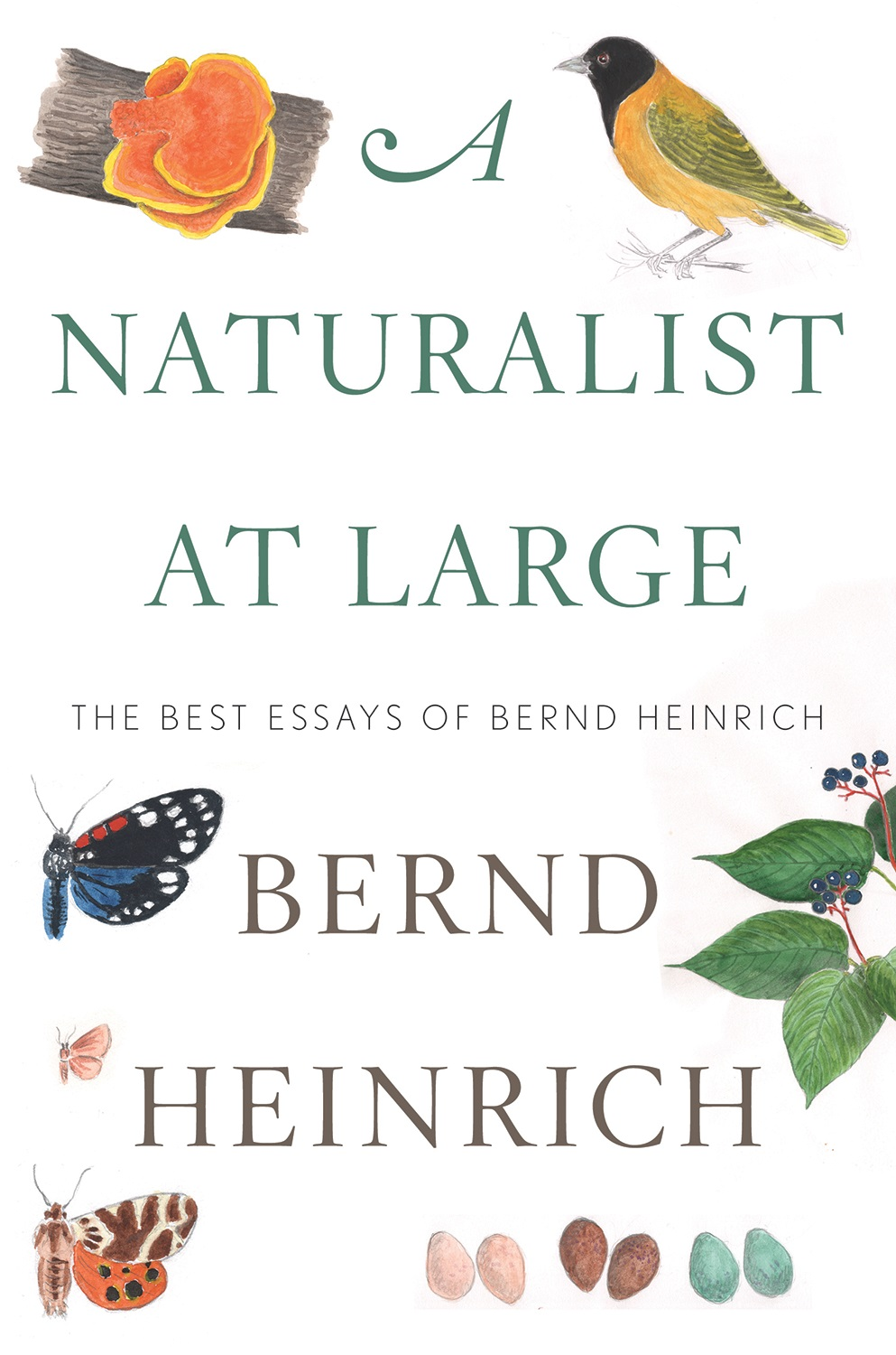 A Naturalist at Large: The Best Essays of Bernd Heinrich  by Bernd Heinrich  (Houghton Mifflin Harcourt)   READ MORE
