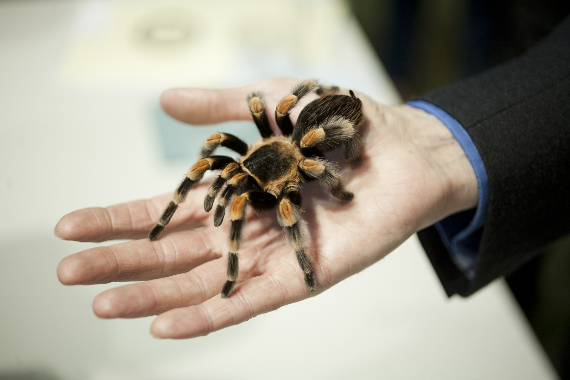 Friendly Spider Programme, Zoological Society of London -  TimeOut