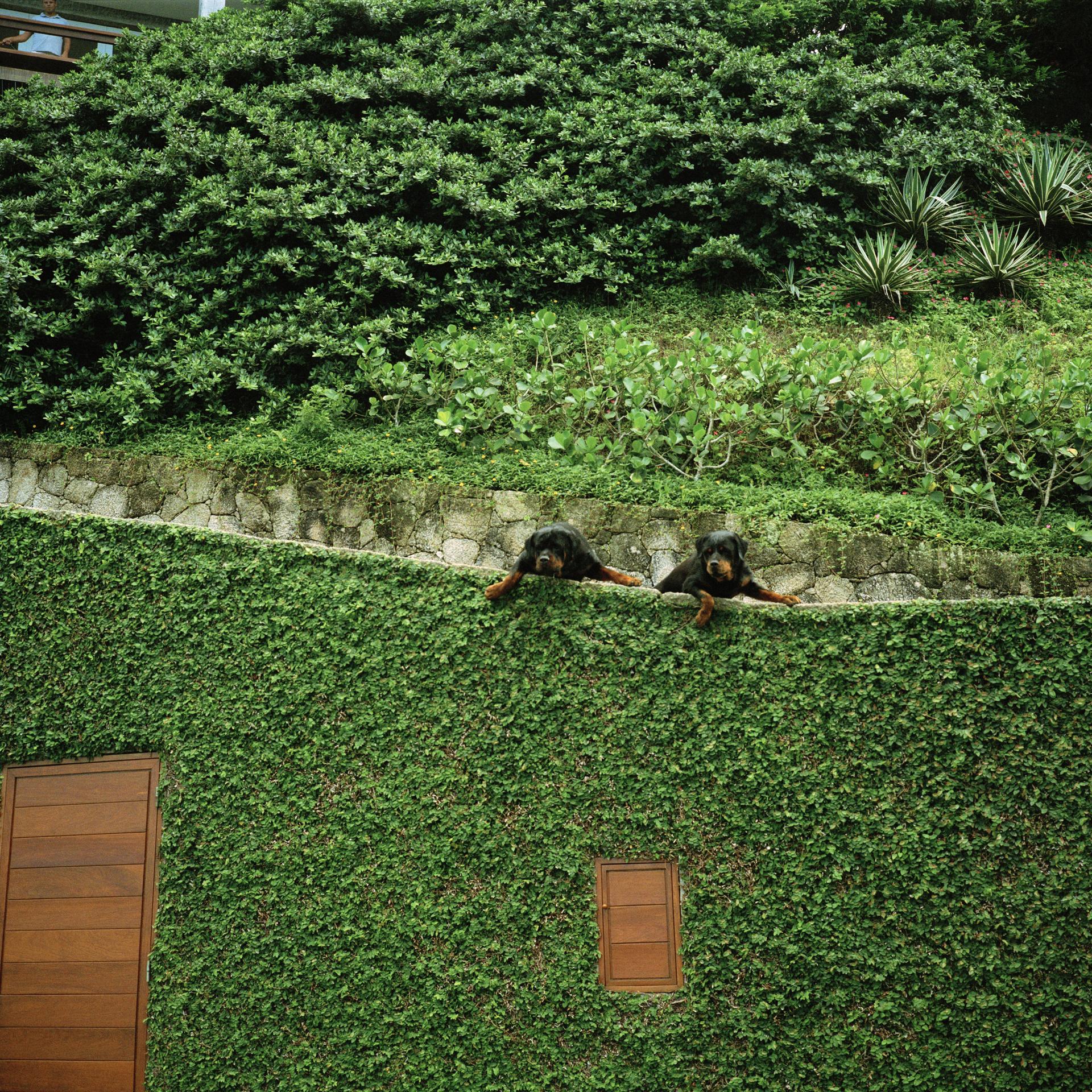 Joatinga neighbourhood. Guard dogs.