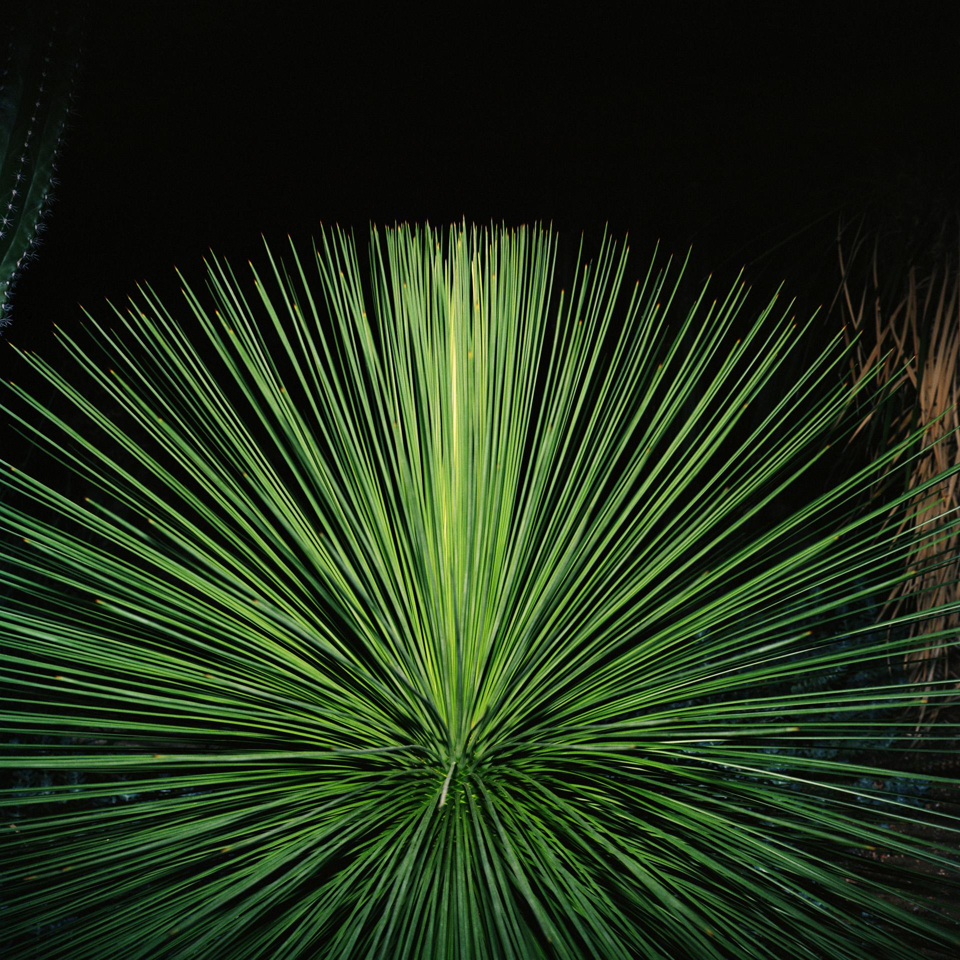 Night Cactus 001