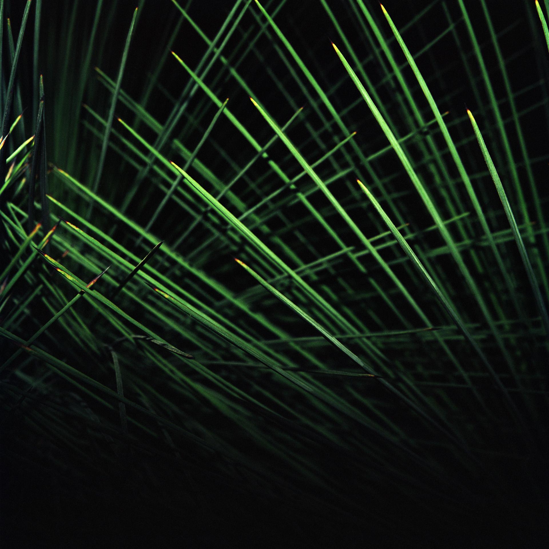 Night Cactus 012