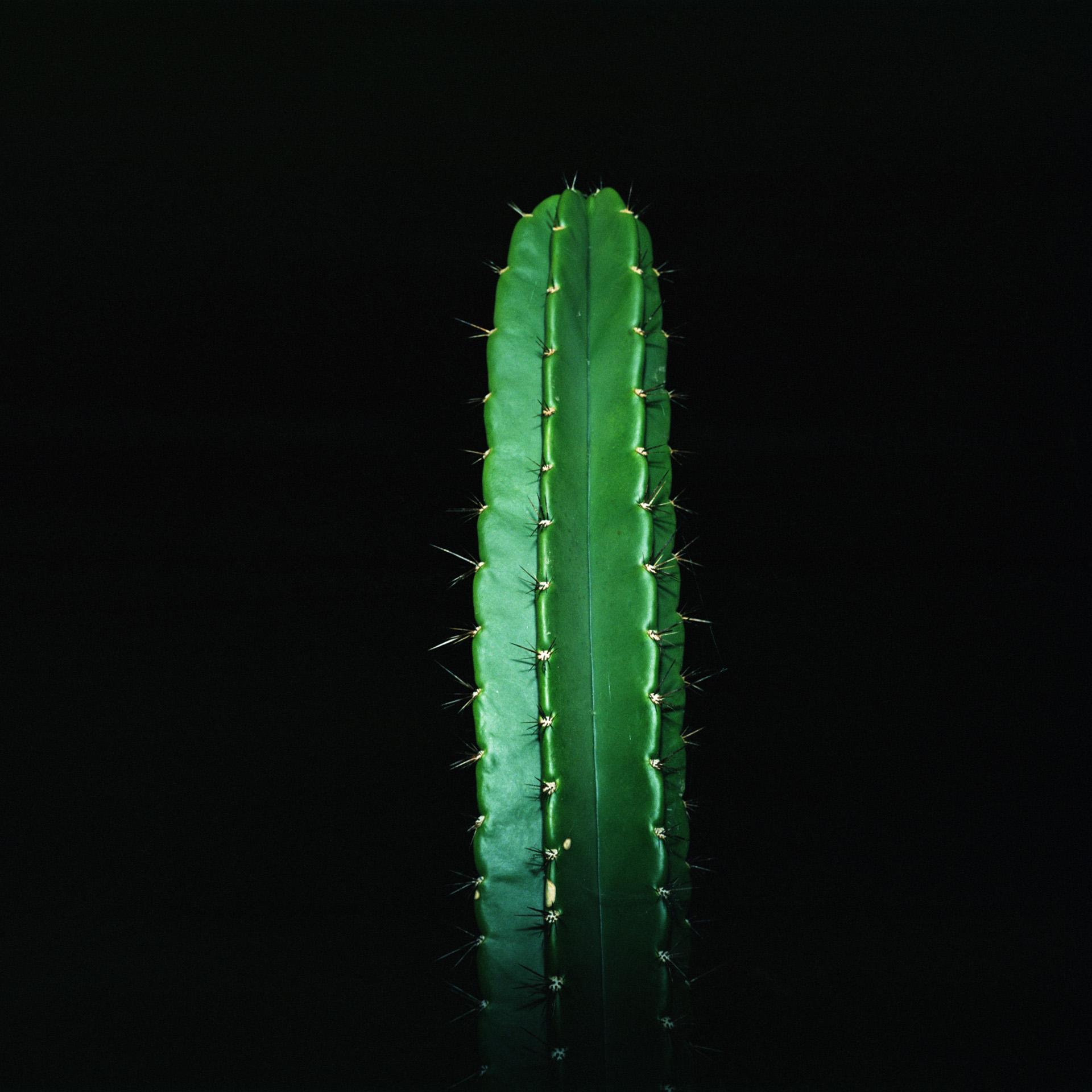 Night Cactus 043
