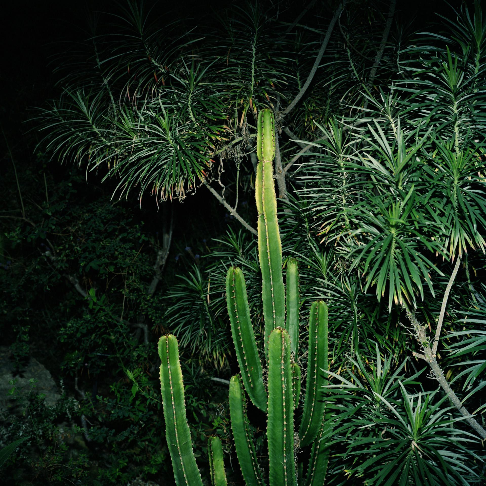 Night Cactus 052