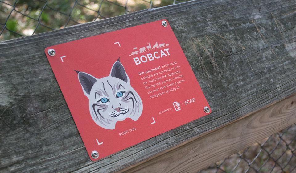 portfolio_carousel_bobcat.jpg
