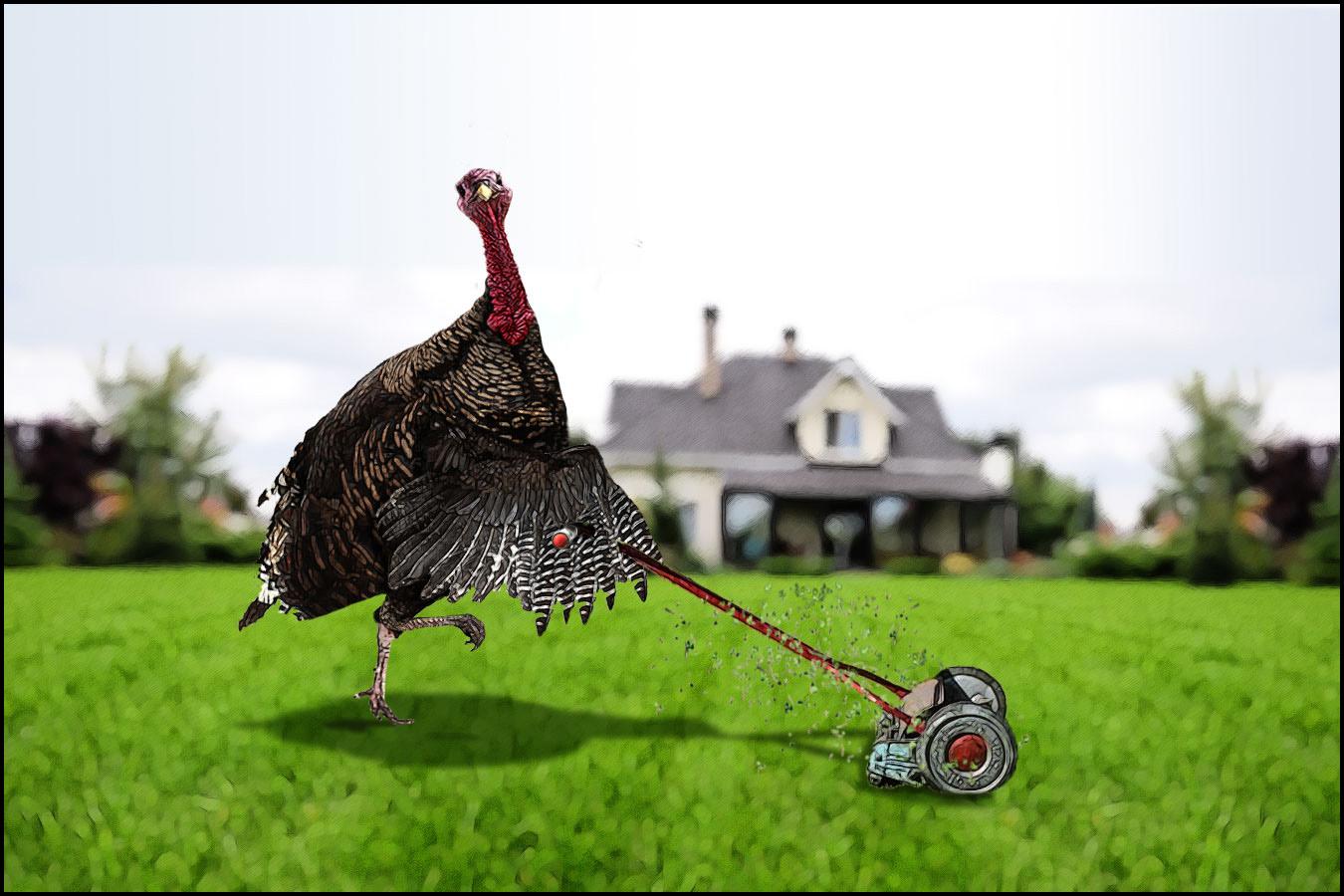 05_turkey.jpg