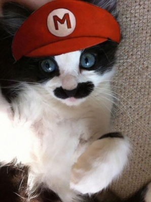 halloween-costumes-for-pets-3.jpg