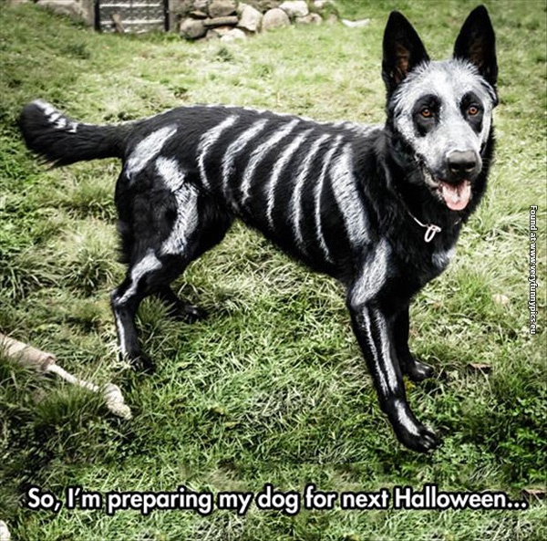 funny-pictures-halloween-dog.jpg