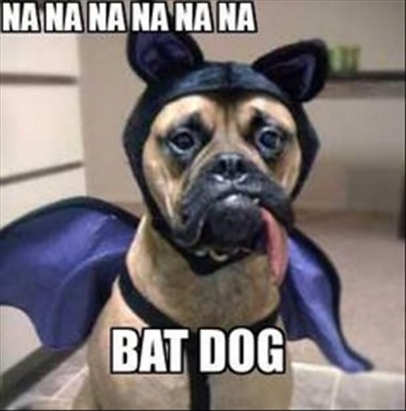 Funny-Bat-Dog-Meme-Image.jpg
