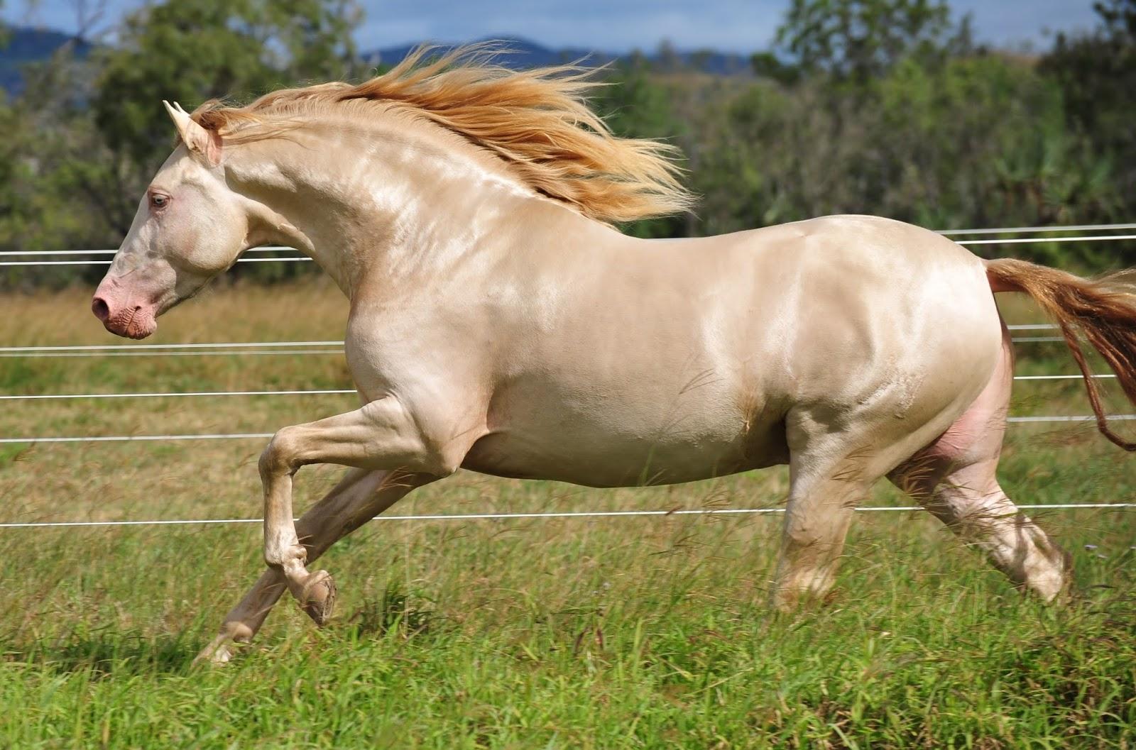 andalusian-horse.jpg