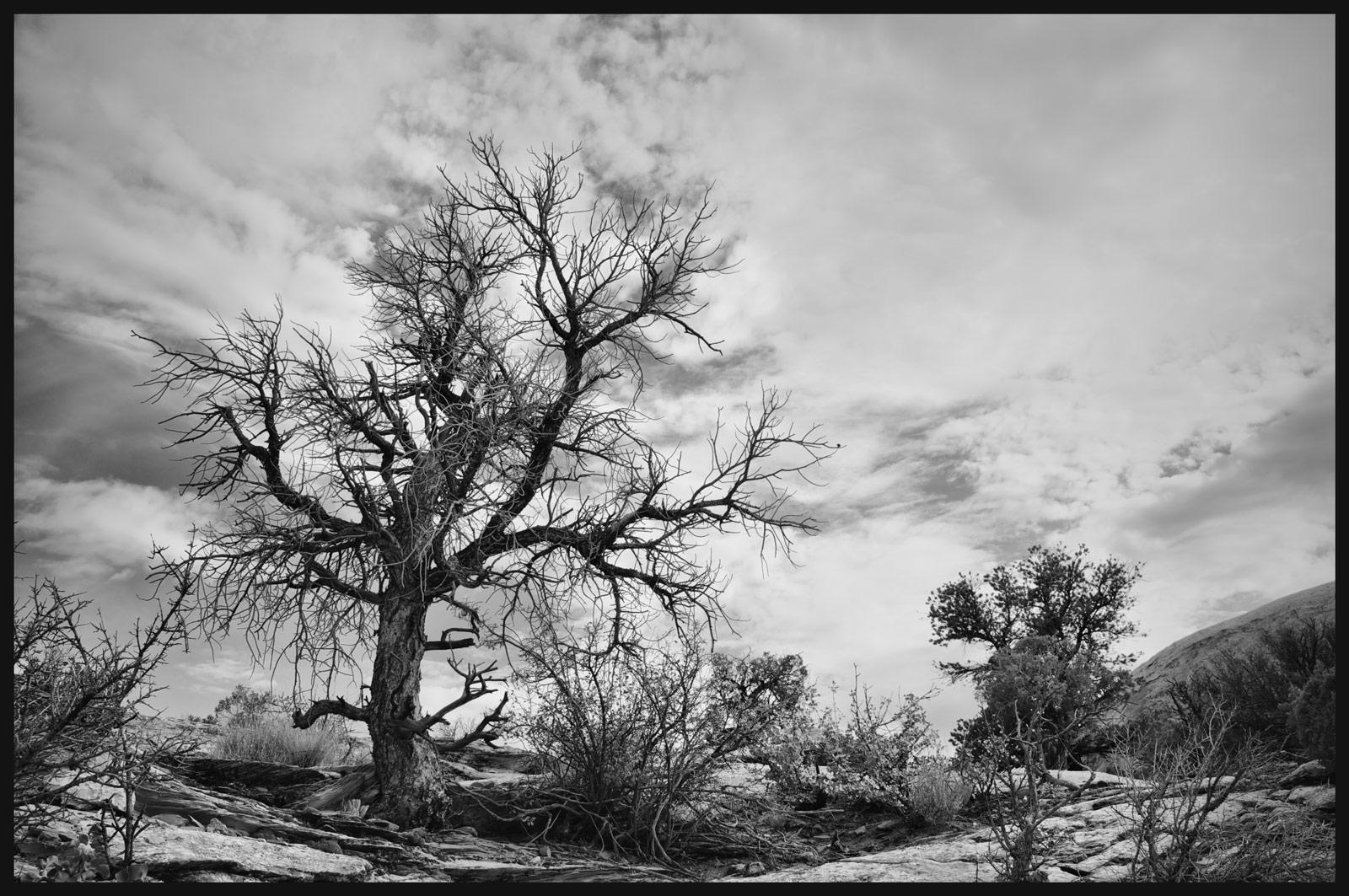 20120714_Canyonlands_NP_1449.jpg