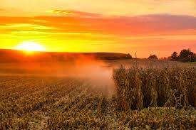 harvest pic.jpg