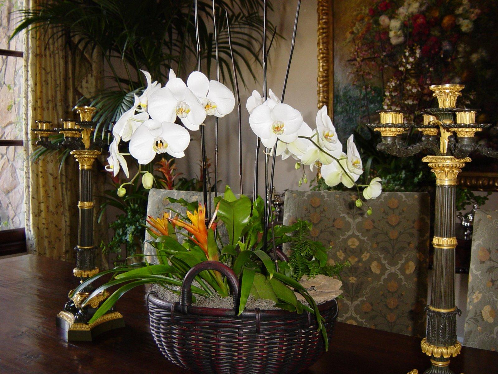 Orchid Estate image.JPG