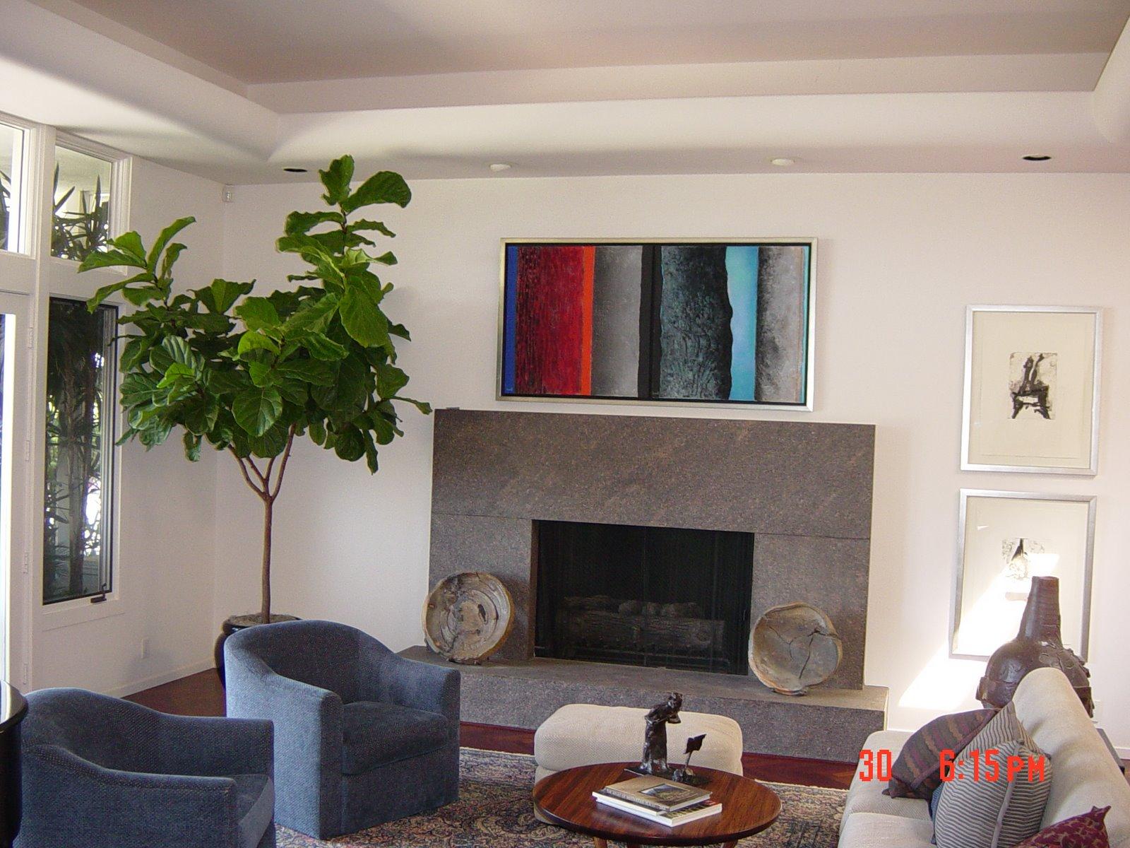 Ficus lvn room.jpg