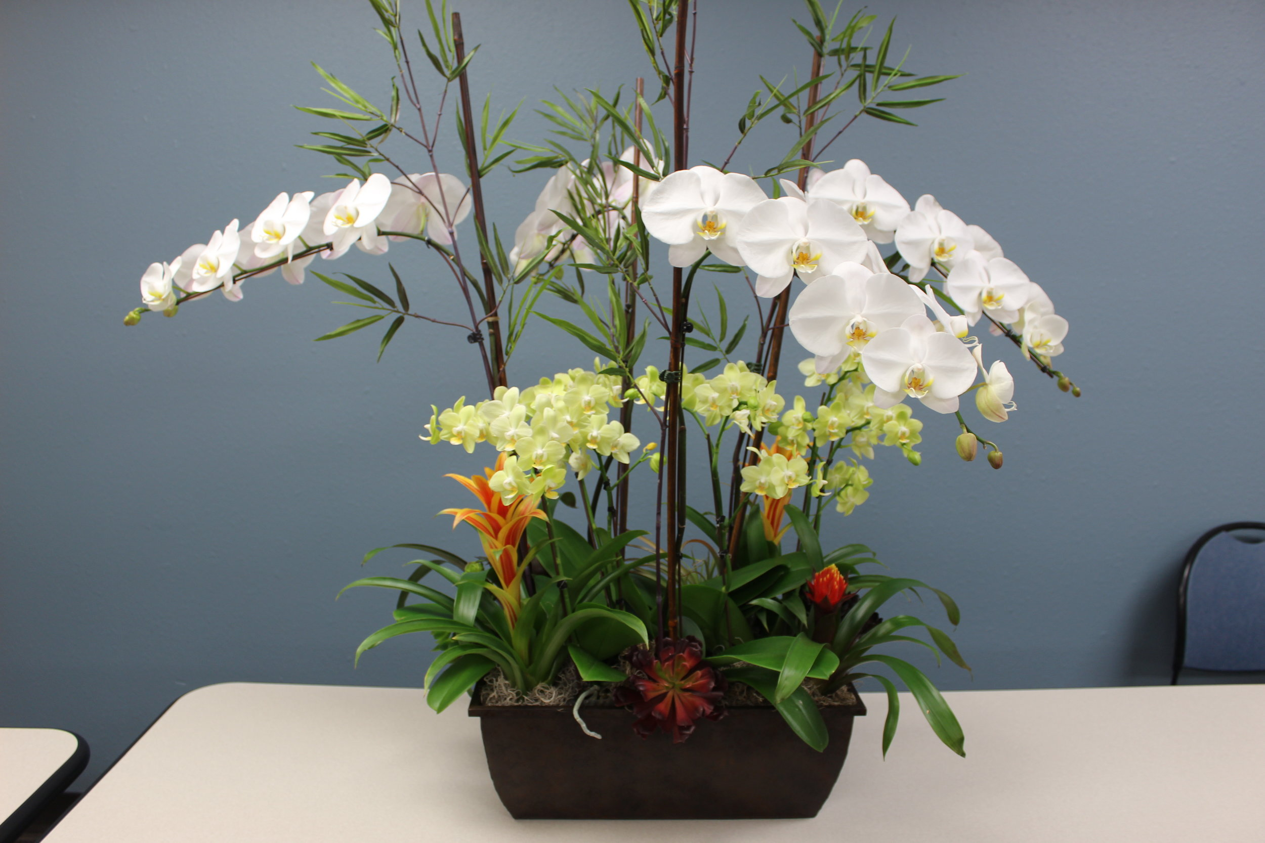 Bromeliad and Orchid Arrangements