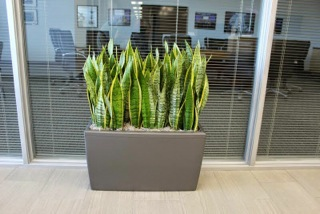 Contemporary Office Plantscapes