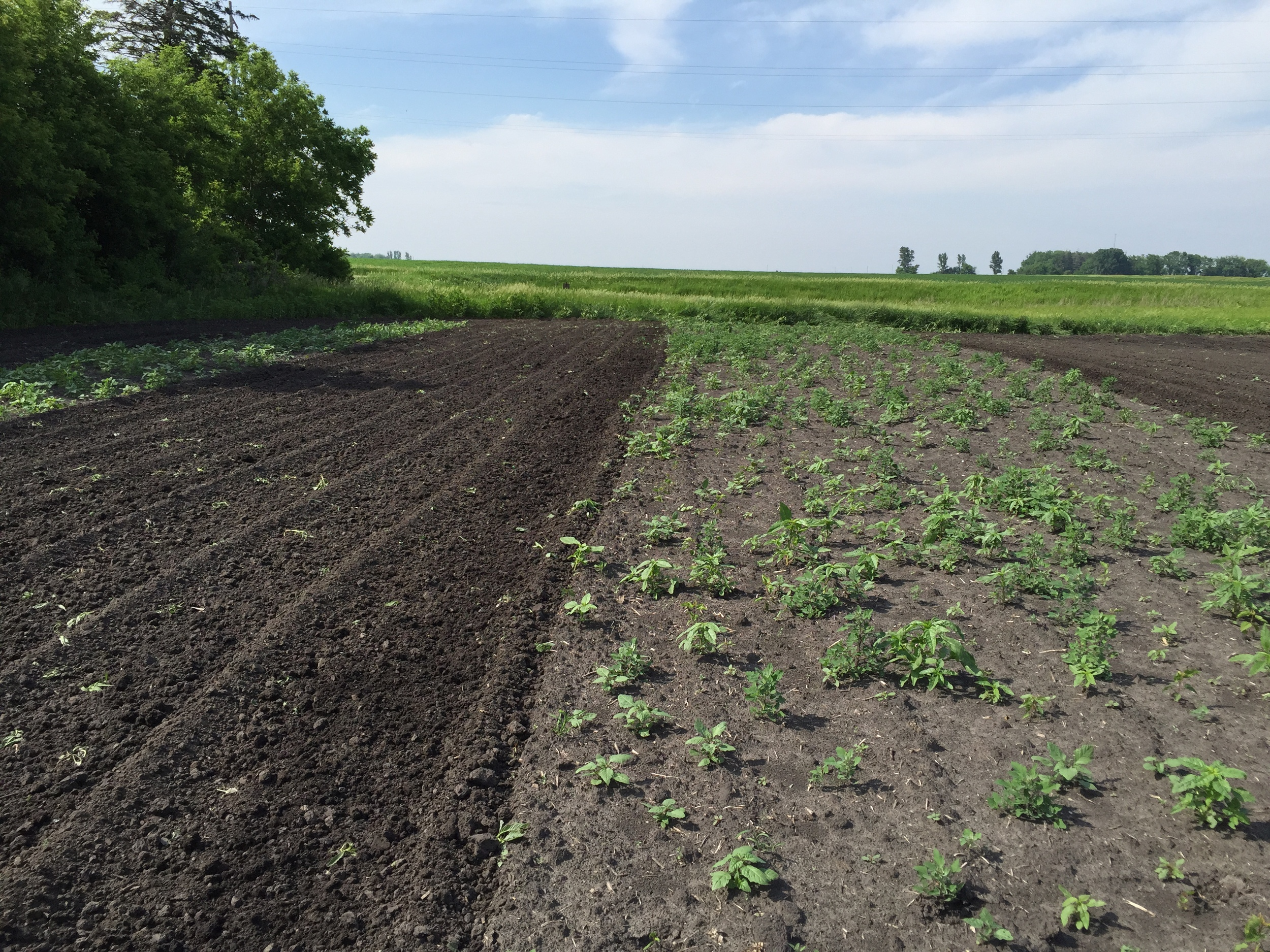 Before and after tilling