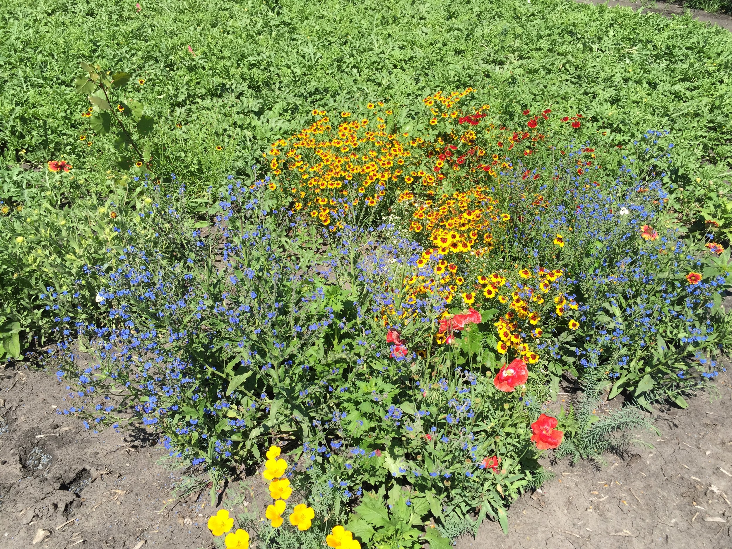 Polinator attracting flowers in full bloom.