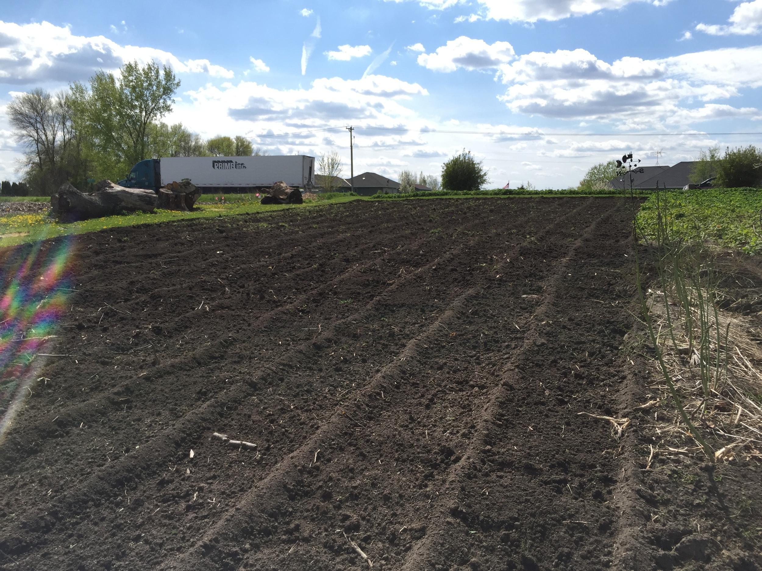 The garden plot, freshly tilled and ready for transplants.