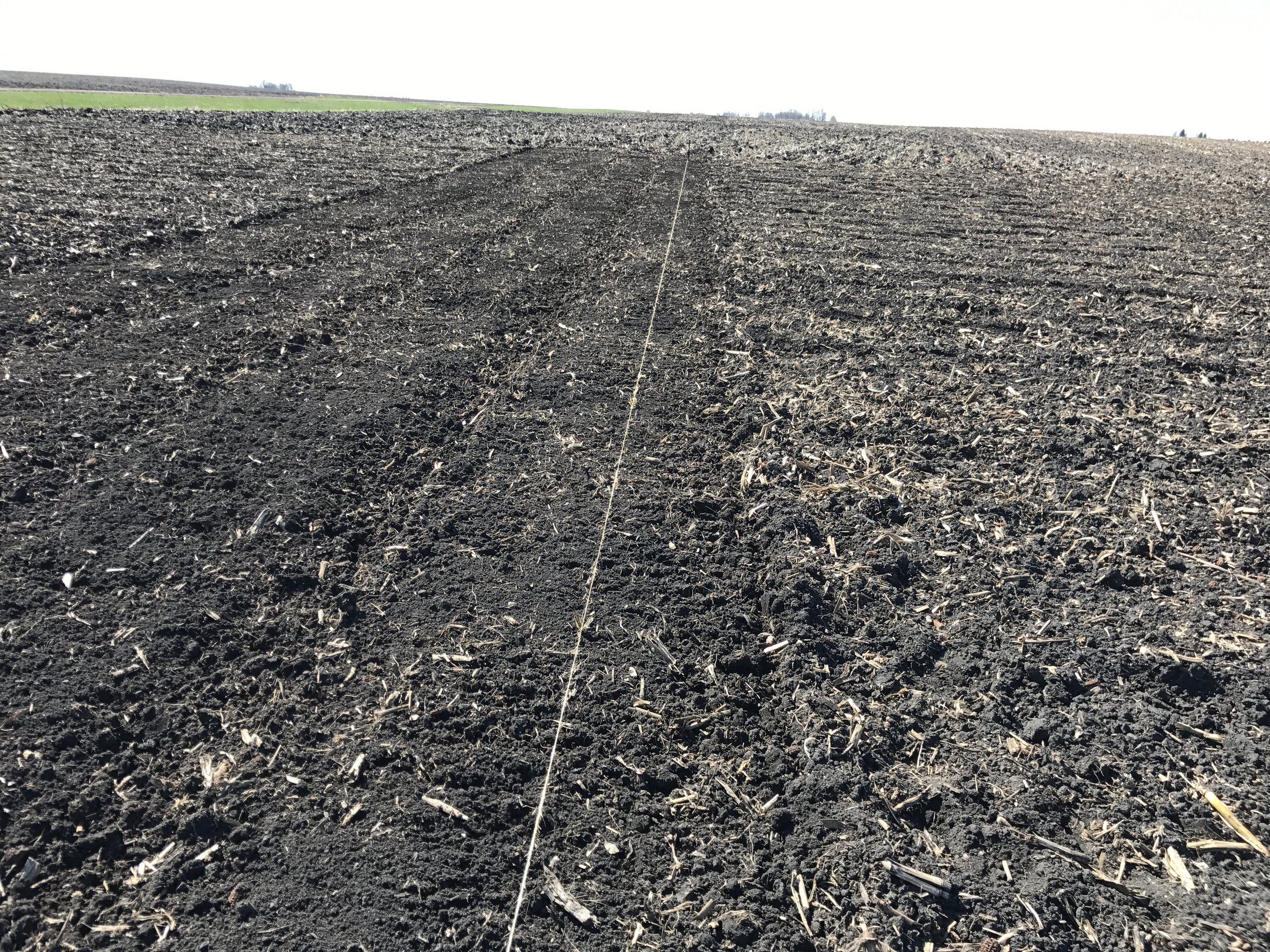 A nice straight row. The plants don't care if it's straight or now but certainly helps us humans keep organized.