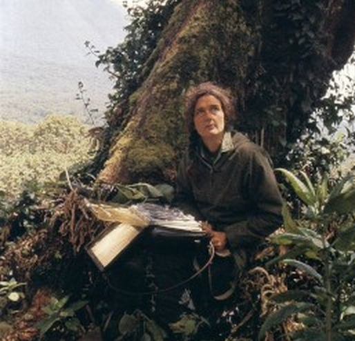 Dian Fossey recording vocalizations. Image courtesy of   Dian Fossey Gorilla Fund International