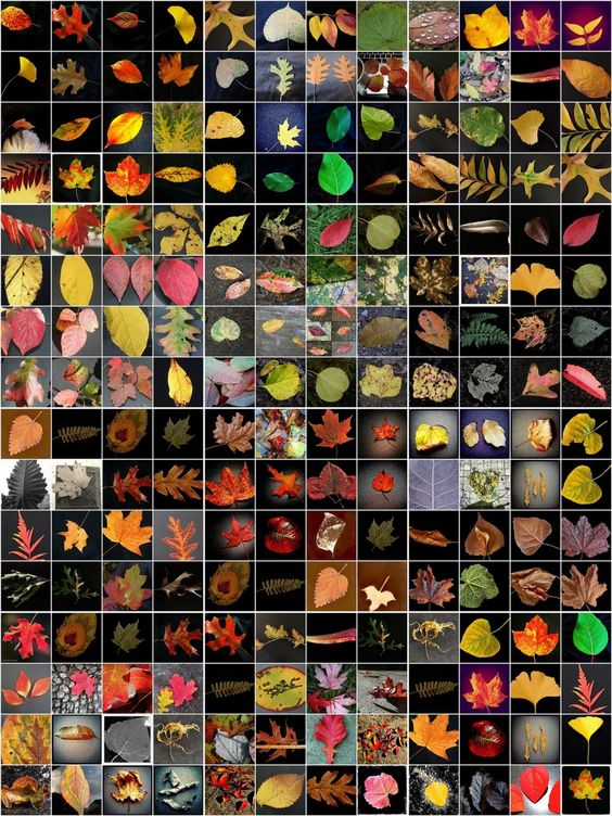fallen leaves.jpg
