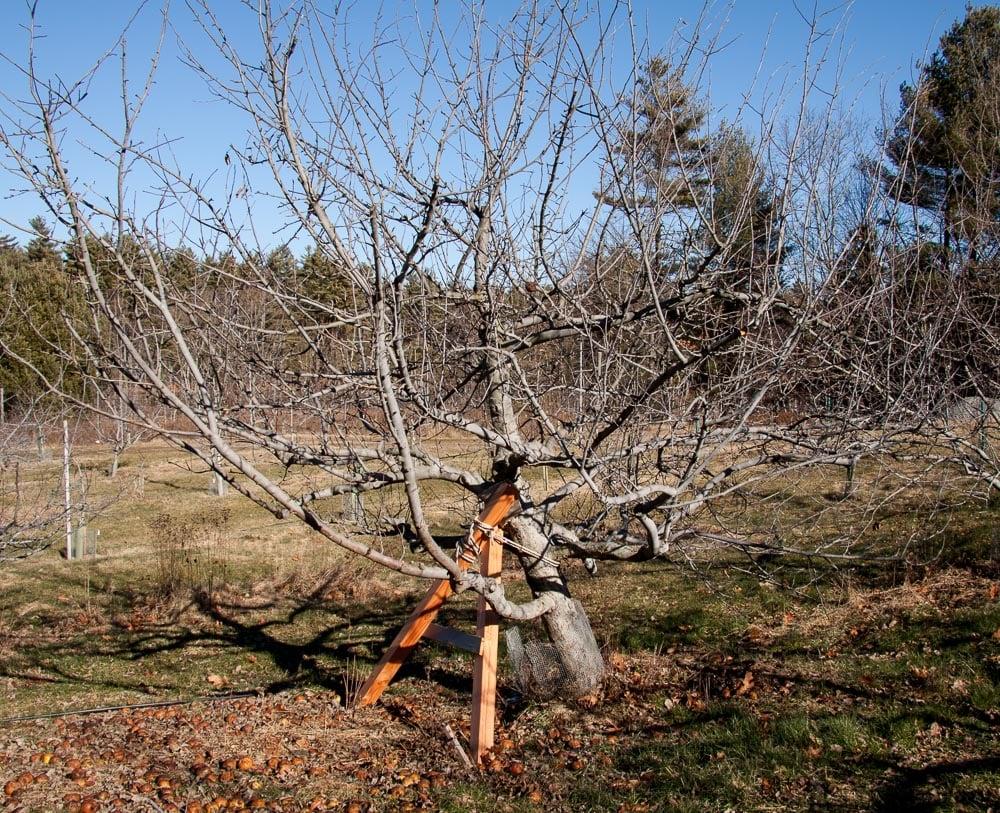 Fallen Tree-5.jpg