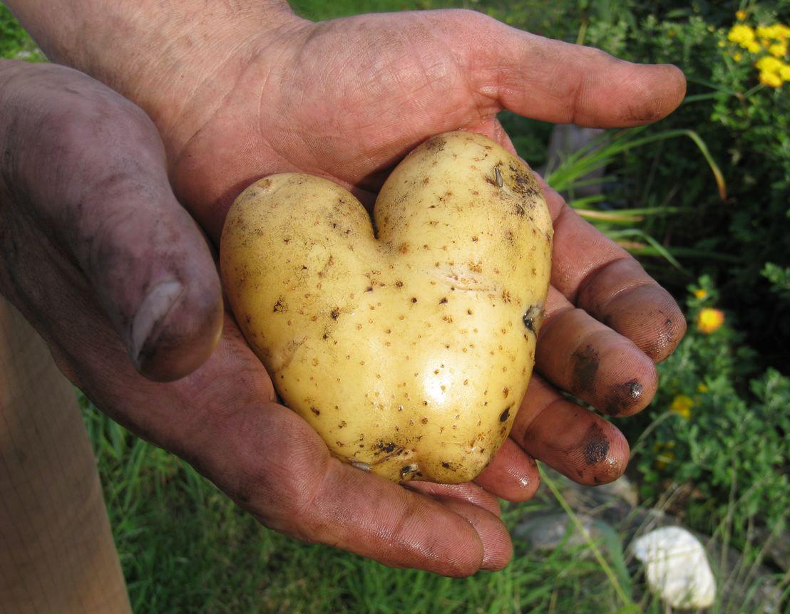Photo: Blase Offers a Potato Heart