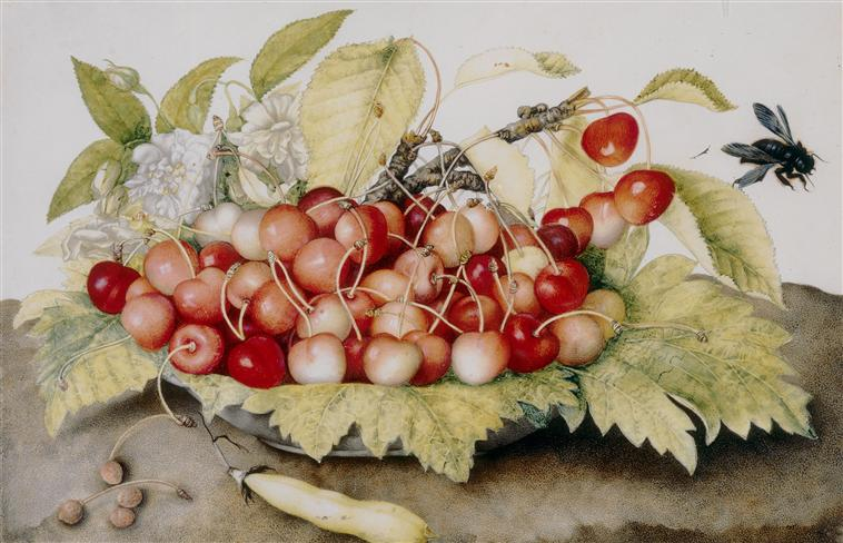Bowl of Cherries, Giovanna Garzoni