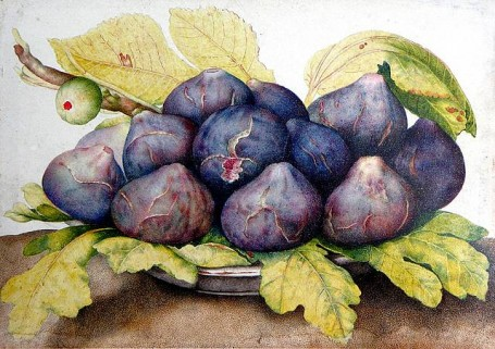 Plums and Fig Leaves, Giovanna Garzoni
