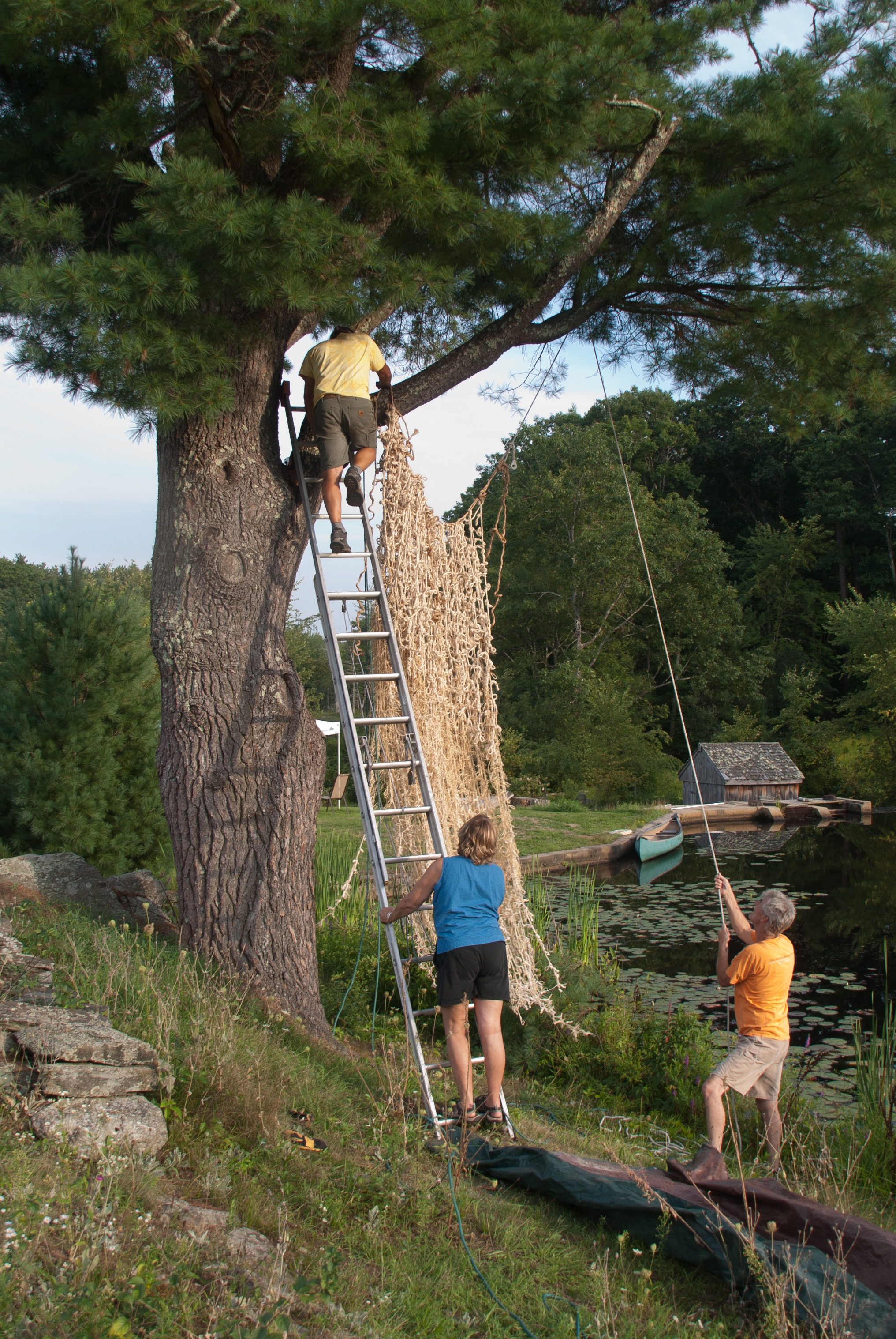 Installing  Source  with Margot, David Crane, & Blase Provitola in the tree.