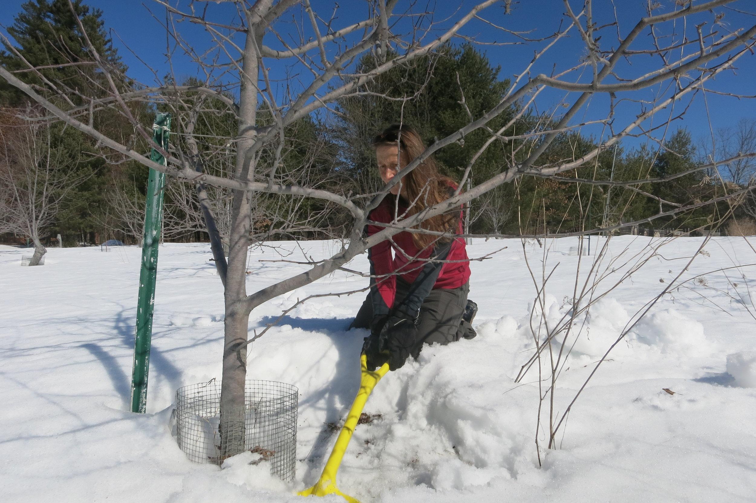 Gabi White tirelessly shoveling snow.