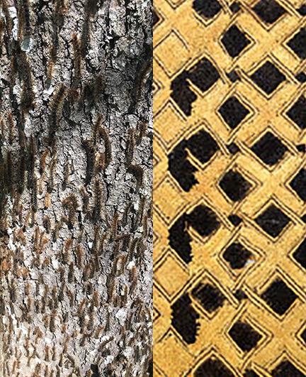 Caterpillars and Kuba Cloth