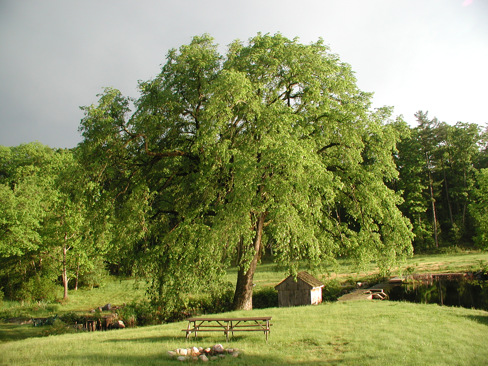 The Elm, May, 2002